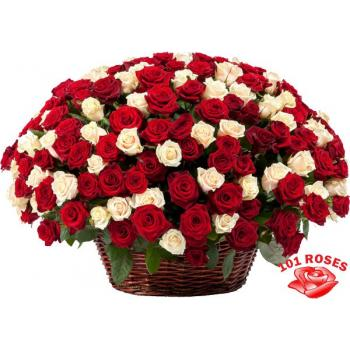 101 multi-colored roses in a basket